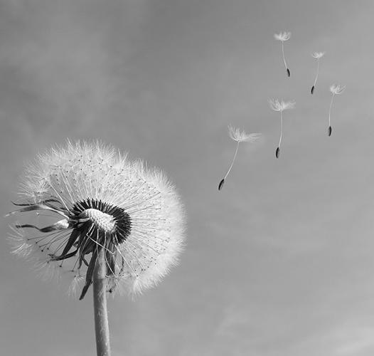 Glasovi u vetru Grozdane Olujić