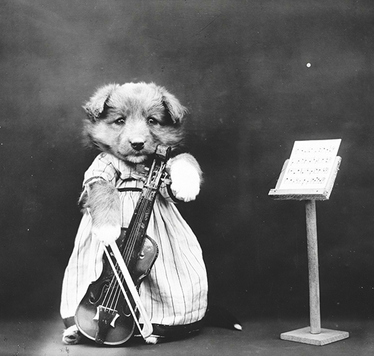 Violinist ili violinista