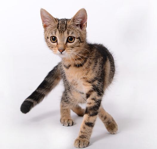 Мачки или мачака