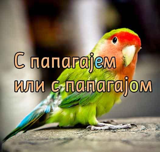 С папагајем или с папагајом